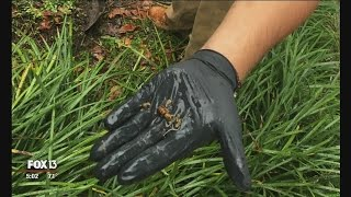 Yellow jackets kill Tampa man