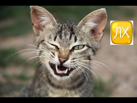 Полезные ЛАЙФХАКИ для тех, у кого есть кошки!