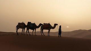 Sahara Desert with Camel