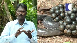 Snake Master - Episode-94 - Kaumudy Tv