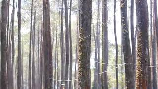 BUKTI - VIRGOUN COVER BY SHAKIRA J (VIDEO CLIP BY ARIEF TEARSIANA B)