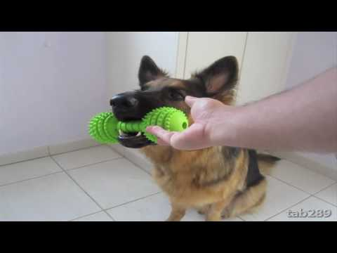 0 Dog Training Tutorial: Holding Objects & Clean Up!