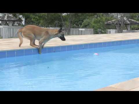 Malabo Pet Resort - Apresentação