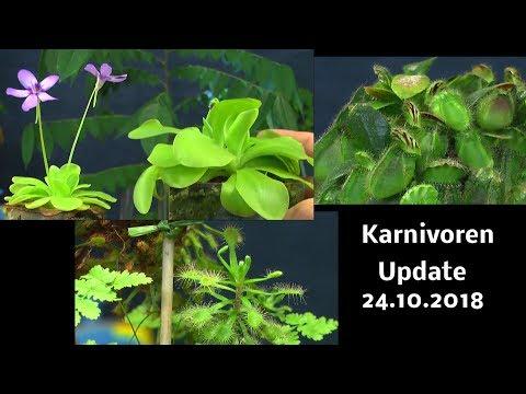 Karnivoren, Fettkraut, Zwergkrug und Sonnentau im Update