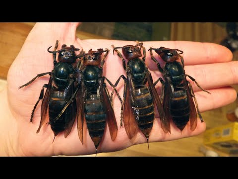 10 Deadliest Insects In The World
