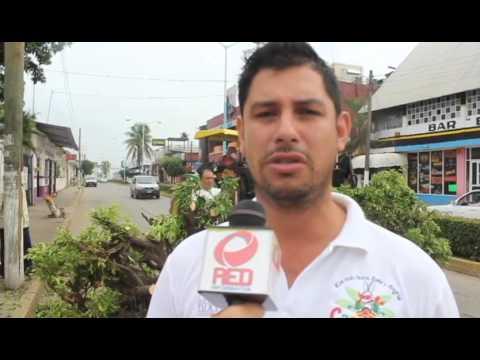 RED INFORMATIVA   Desforestación de ficus en boulevares, por causa de accidentes automovilísticos