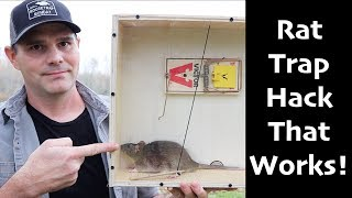 A Rat Trap Hack That Works! How To Catch MORE Rats & Mice  -  Mousetrap Monday