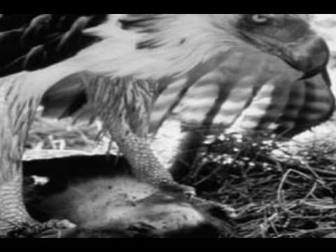 Philippine Eagle | King of the Birds