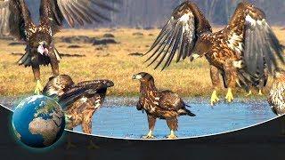 Wildlife in Germany's lakes