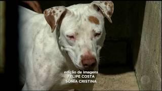 Cães vão para abrigo após a morte de seu dono, um ex-morador de rua
