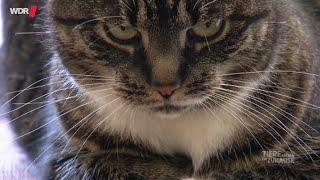 Können Katzen Menschen lieben? | WDR