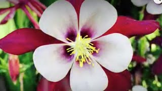 FILIPINA FLOWER POWER - MY WIFE'S FIRST YOUTUBE VIDEO WITH LOVE