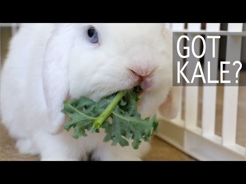Bunny Goes Crazy for Kale! My BB Bunny