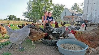 What it's like to live with 85 chickens