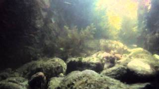 olympus tough tg-610 underwater video sample