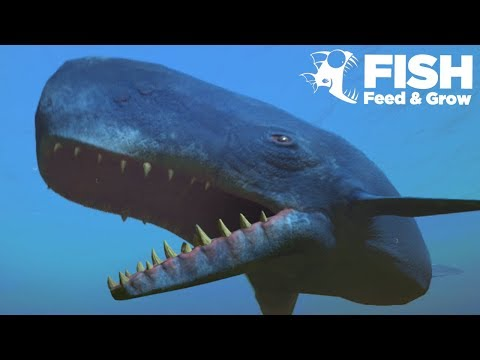 NEW WHALE IS THE BIGGEST!!! - Fish Feed Grow
