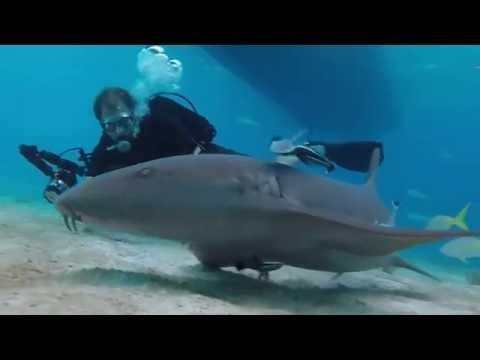 NURSE SHARKS of Tiger Beach - Grand Bahama July 2014