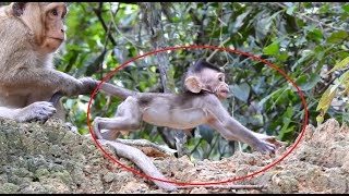 Kidnapper drag baby monkey's tail very bad, pity baby cry loudly