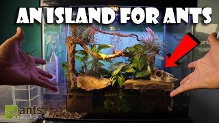 Creating an Island for Ants (Paludarium)