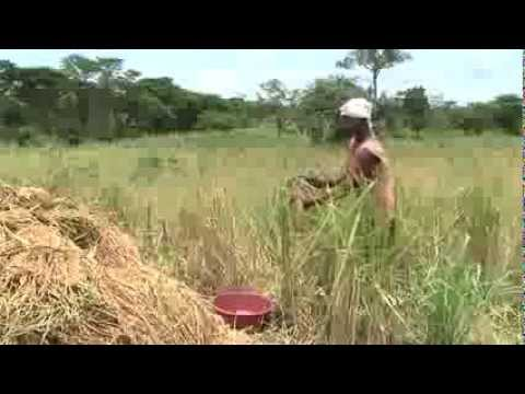 Improving food security and agricultural livelihoods in Northern Uganda