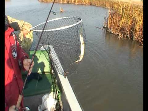 камызяк рыбная ловля  форум