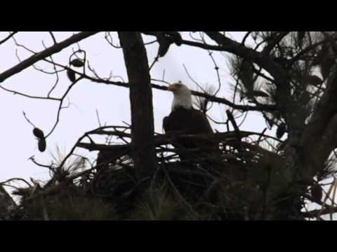 Eagle Watching - Lake Guntersville, AL