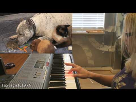 MUSIC 4: Amazing interspecies FRiENDS: Cat, rabbit, guinea pig,pit bull SHARKY.