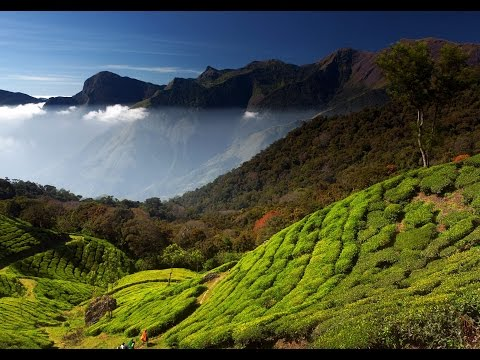 Top Honeymoon Destinations in Kerala