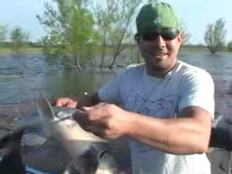 Bowfishing Tips Greatest Bowfishing Tip Ever