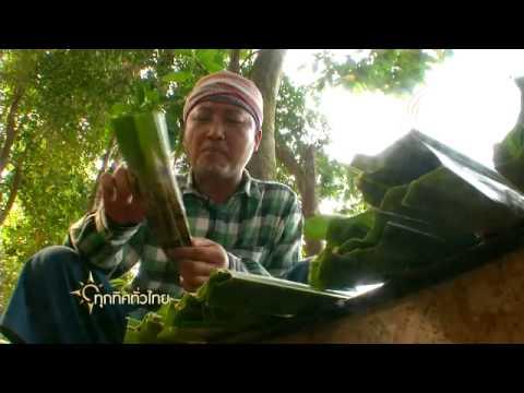 ทุกทิศทั่วไทย : อาชีพเลี้ยงปลาจาระเม็ดน้ำจืด จ.ราชบุรี (2 เม.ย.57)