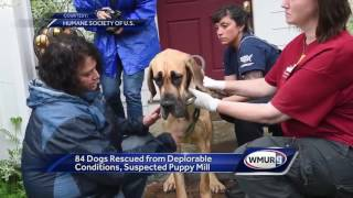 WATCH: 80 Great Danes rescued- 6 p.m.