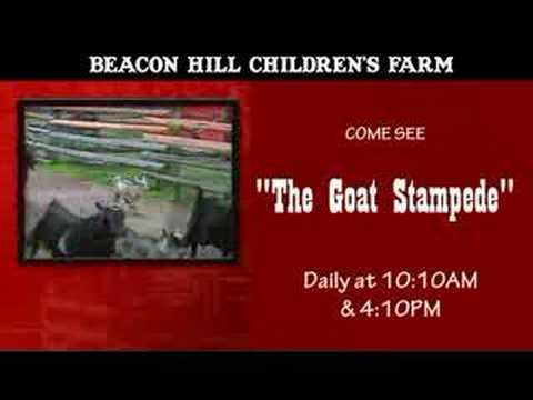Goat Stampede