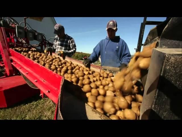 'Harvest Break' Endures in Maine Potato Fields