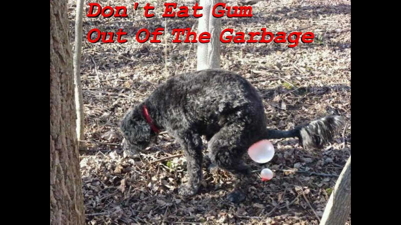 Dog Eats Out Of Garbage