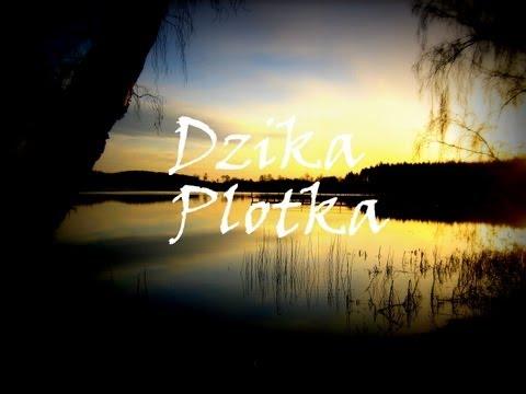Wędkarstwo - Wakacje Nad Jeziorem Wieleckim Cz 4. Spławik