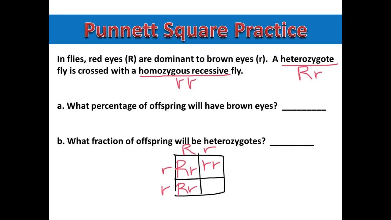 Punnett Square Lesson  Mrs Gattis Classroom Website