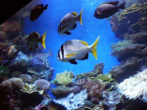 Unterwasserobservatorium Eilat (Israel) / Coral Beach Natural Reserve
