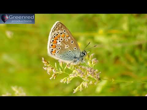 Happiness Frequency - Serotonin, Dopamine and Endorphin Release Music with Binaural Beats