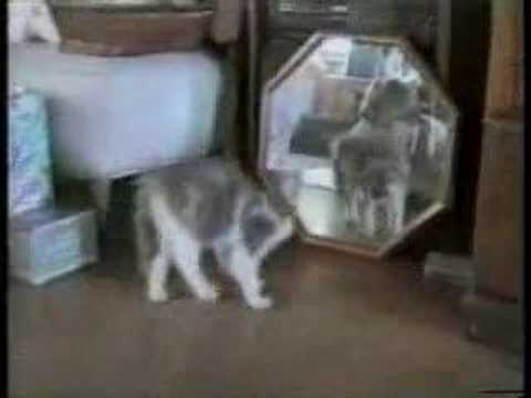 動物おもしろムービー 猫ハプニング集