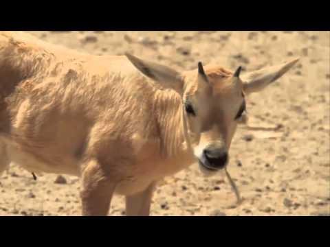 The Wildlife Nature Reserve in the Israeli Desert