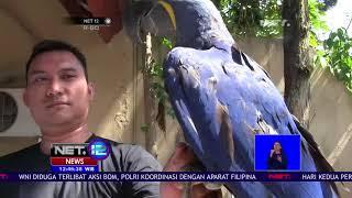 Ini Dia Burung Macaw Yang Ditaksir Mencapai Ratusan Juta Rupiah-NET12