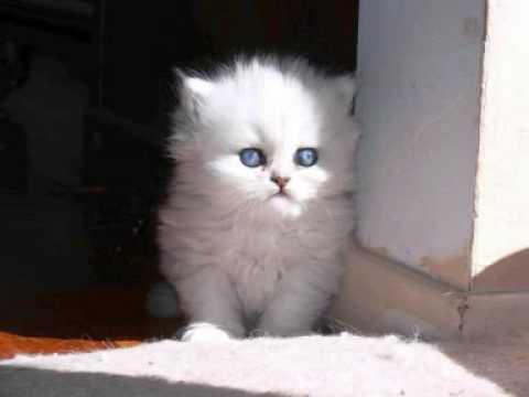PMMP jospa minä kissan saisin.wmv