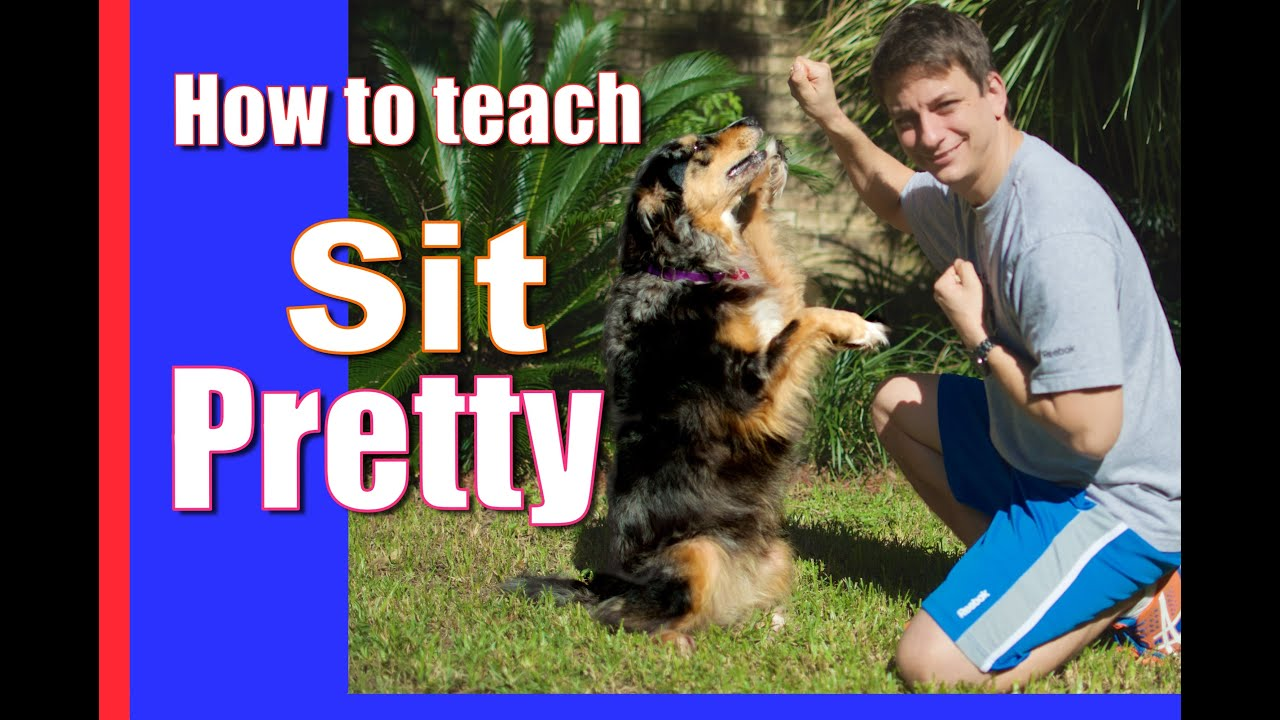 how to teach dog to sit pretty