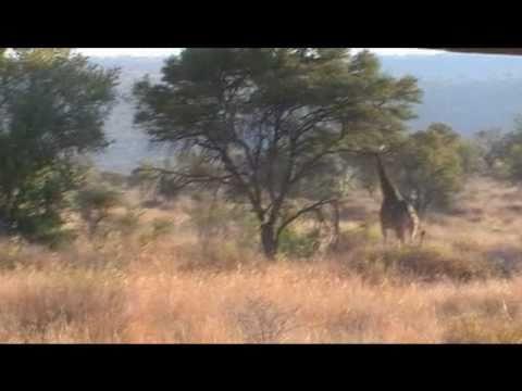 Rondreis Zuid – Afrika deel 1