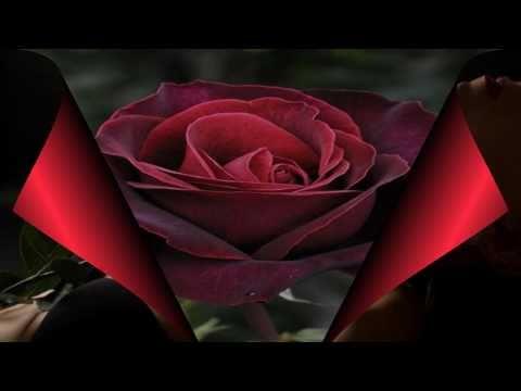 Gazde - Ružo moja crvena