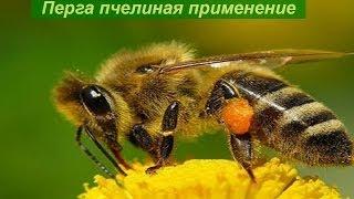Перга пчелиная применение!