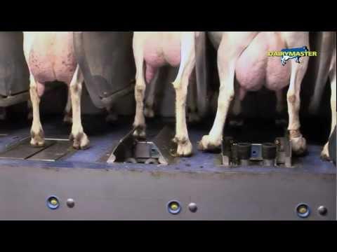 Dairymaster 120 stand Ziegekarussell