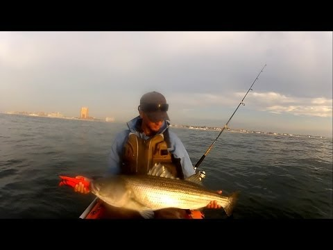 43 INCH Striped Bass Catch and Release - NJ Kayak Fishing