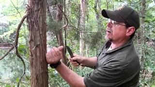How to get Tinder from a Cedar Tree, Quick Survival Tip