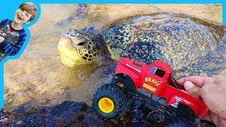 Monster Trucks for Children Find Sea Turtles!
